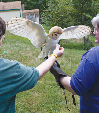 Return to the Wild Rescuing and Restoring Raptors