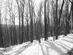 3rd Annual Brown County Winter Hike