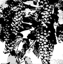 Possum Trot Vineyards