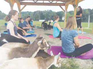 Goat yoga session at the farm