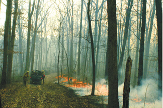 Prescribed Park Burn