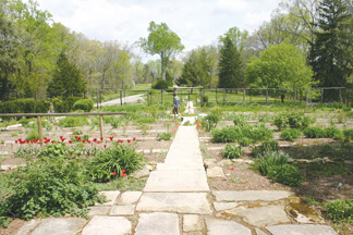 Selma's Gardens