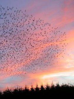 The Robins came to Roost